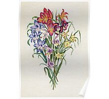 Vintage Floral Illustration Poster