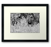 Plains Zebra, South Africa Framed Print