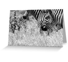 Plains Zebra, South Africa Greeting Card