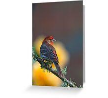 Fabulous Finch Greeting Card