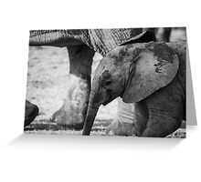 Elephant Calf, South Africa Greeting Card