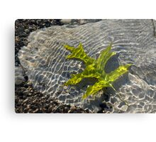 Green Sunshine - a Jade Colored Oak Leaf on the Rocks Metal Print