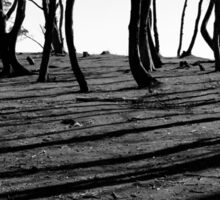 Black & White Trees Sticker