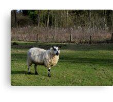 Sally the Sheep Canvas Print