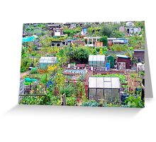 Edinburgh Allotments Greeting Card