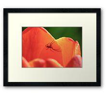 Spiders Flower Home Framed Print