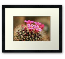 Cacti Flowers Framed Print