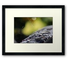 Leaf and Cobweb Framed Print