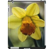 First Spring Daffodil - Bridgton,  Maine iPad Case/Skin
