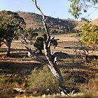 Autumn around Bredbo NSW/Australia (6) by Wolf Sverak