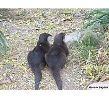 Two Tails Photographic Print