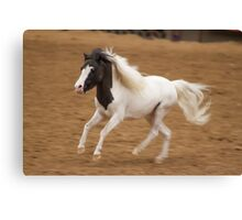 The Equine Touch - Tiny Horse Power Canvas Print