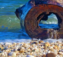 Hollow Tree Trunk Washed Ashore | Orient Point, New York  Sticker