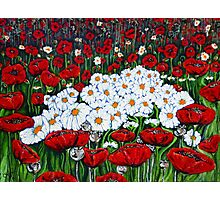 Rubies And Pearls Flowers Daisy Poppy Poppies Daisies Field Wildflowers  Photographic Print