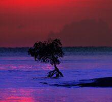 Fireball Bali Sunrise Sticker