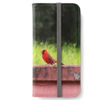 Northern Cardinal: Hilo, Hawai'i iPhone Wallet/Case/Skin