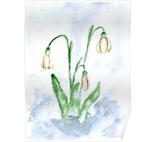 Snowdrop Flowers Painting 3 Poster