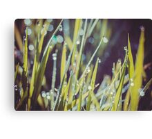 Morning Grass Macro Retro Canvas Print