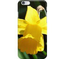 Backlit Daffodil iPhone Case/Skin