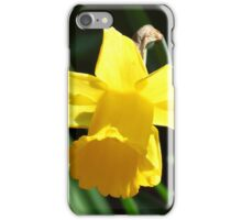 Backlit Daffodil iPhone Case/Skin
