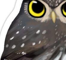 Northern pygmy owl Sticker