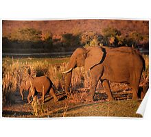 Elephant mother and calf, Kruger National Park Poster
