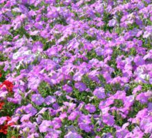 Rows of colorful flowers in the park. Sticker