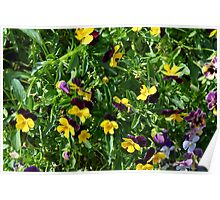 Yellow flowers in the green grass. Poster