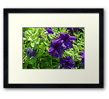 Dark purple flowers natural background. Framed Print