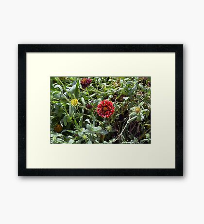 Red flowers in the green grass. Framed Print
