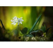 Floweret Photographic Print