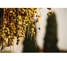 bunch of berries in bright sunlight Photographic Print