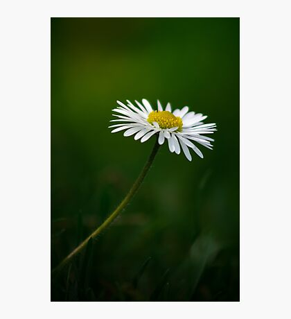 Wonderful spring - small white Photographic Print