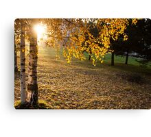 autumn city Park with yellow trees  Canvas Print