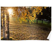 autumn city Park with yellow trees  Poster