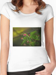 Apple tree bud Women's Fitted Scoop T-Shirt