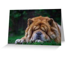 Cuddly - chow-chow dog Greeting Card