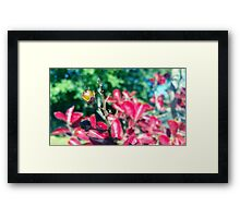 Autumn Berry Framed Print