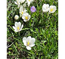 flowers in dolomites Photographic Print