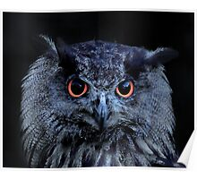Orange Eyed Owl Portrait Poster