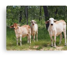 Outback Cattle Canvas Print