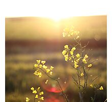 ...and it was called yellow... Photographic Print