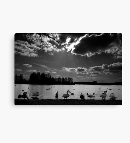 Lakeside Landscape #1 Canvas Print