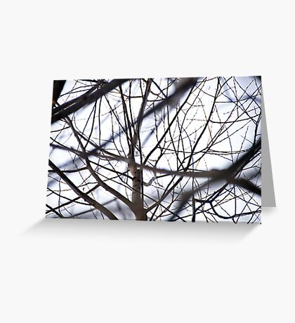 the tracery of offshoots of a tree Greeting Card