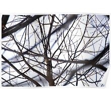 the tracery of offshoots of a tree Poster