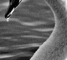 Swan Drinking Sticker