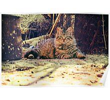 A Big rural Cat Poster