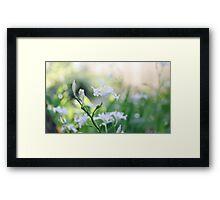 White Iris 3 Framed Print