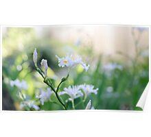 White Iris 3 Poster