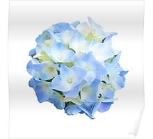 The Peaceful Hydrangea Poster